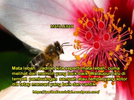 Mata Lebah